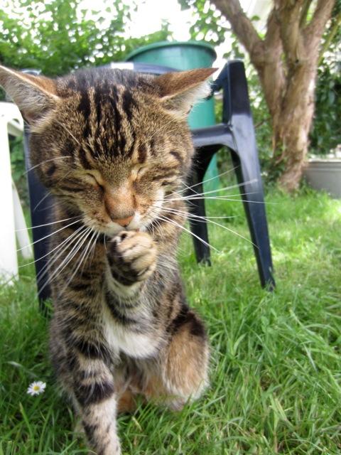 kitchencat-Pete und Sahne