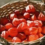 Liebe in Orange: Lampions aus Nachbarsgarten