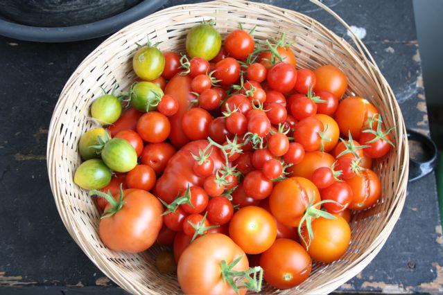 kitchencat-tomatenernte