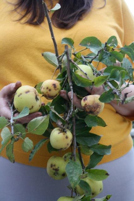 kitchencat-winterpflanzen 3