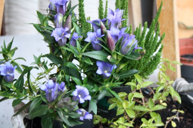 kitchencat-winterpflanzen 6