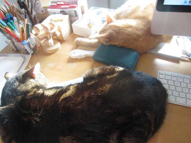 kitchencat-katzenschreibtisch