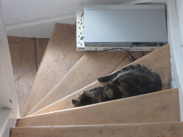 kitchencat-treppenkater