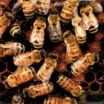 Elternzeitvertretung #2: Bienen in the City