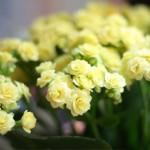Für noch mehr Grün und noch mehr Blühen
