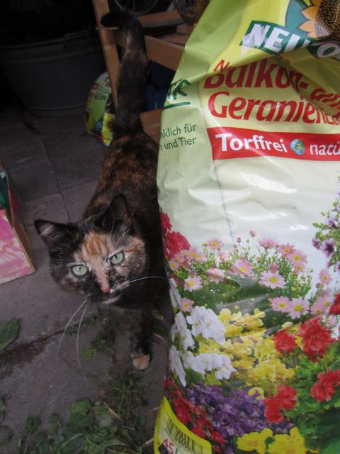 kitchencat-gartenconnie
