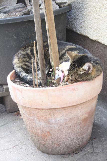 kitchencat-angebaut2