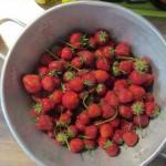 Was für ein Beerensommer – Gelee und Marmelade