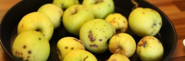 Von den ersten eigenen Äpfeln und einer traumhaften Apfeltarte