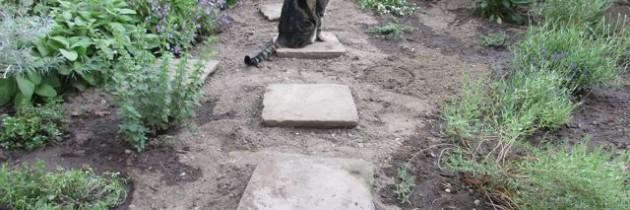 Vom Vorgarten und Gartenbewohnern