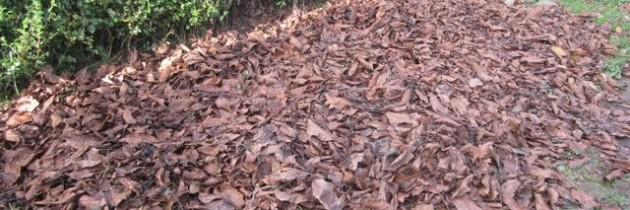 Lästiges Laub – der Flächenkompostierer kommt zum Einsatz