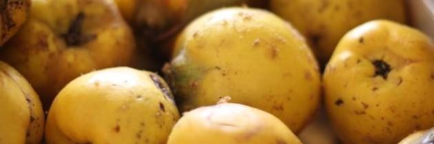 Äpfel, Birnen, Quitten – unsere Ernte dieses Jahr inkl. tollem Buchtipp