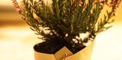 Weihnachtsschlemmerei 2013 – ein Rückblick
